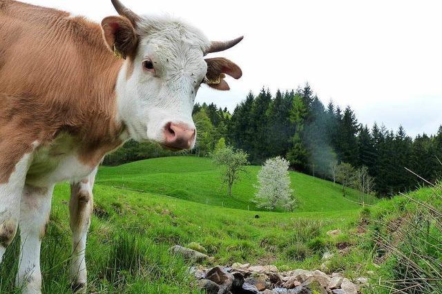 Hochschwarzwald: Mancherorts wird das Wasser knapp