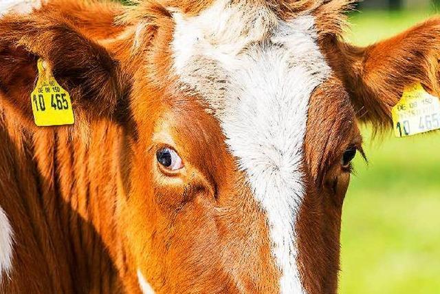 Giftpflanzen im Heu machen Tiere krank