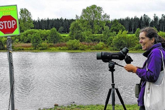 Auf Foto-Vogelpirsch am Kirnbergsee