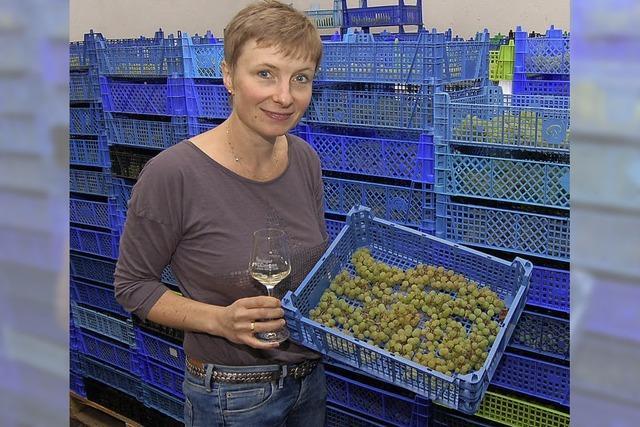 Süß-Wein aus getrockneten Beeren