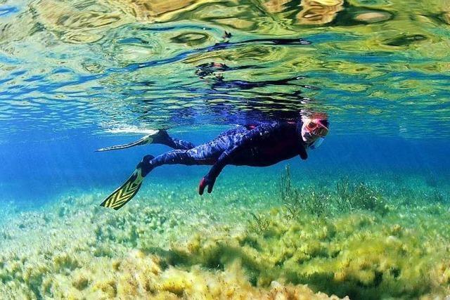 Märchenwald unter Wasser: Die Quelltöpfe am Rhein