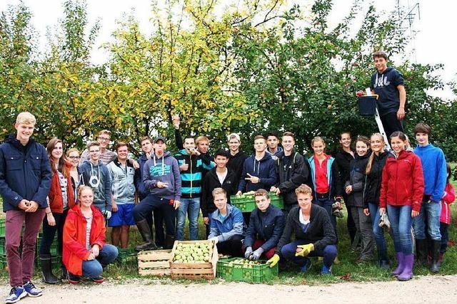 Schüler pflücken Äpfel im Dienste ihres Abiballs