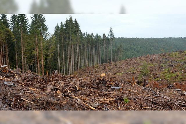 Der Holzvorrat im Stadtwald stimmt