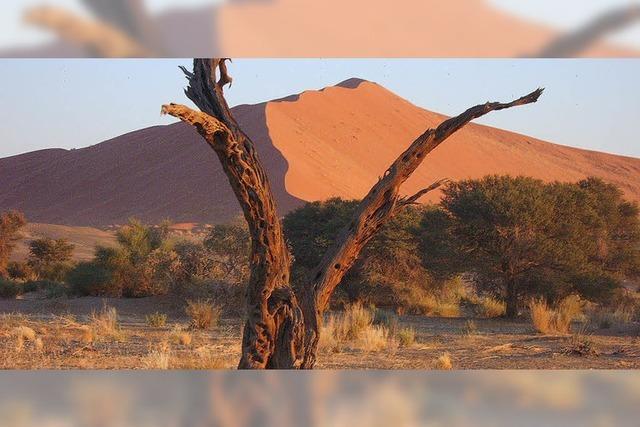 VHS-Reise nach Namibia