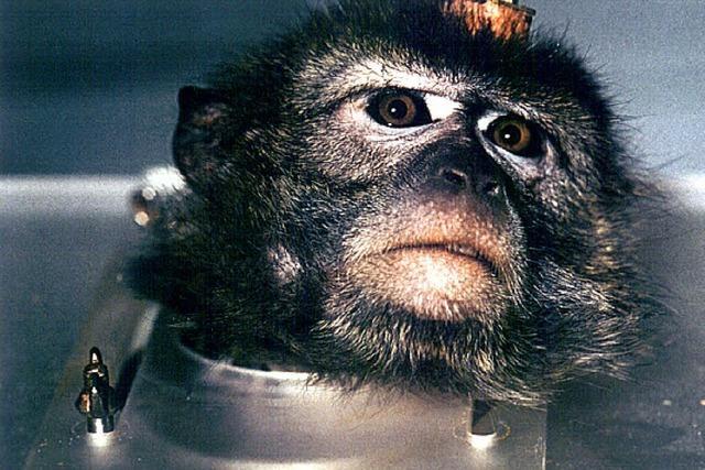 Weniger Leid bei Tierversuchen