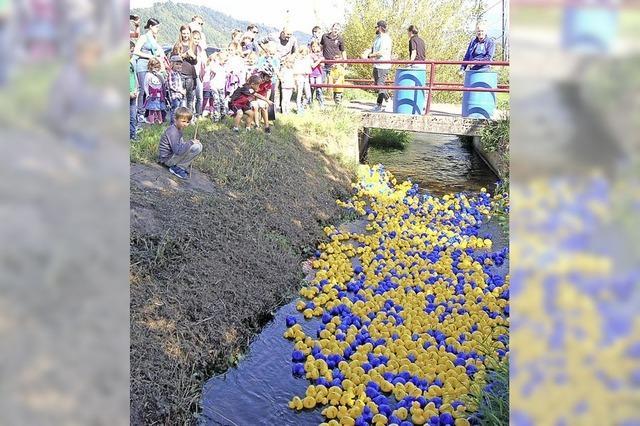 Blaue und gelbe Entchen