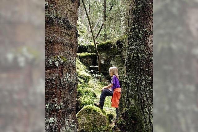 Im Wald des Glücks