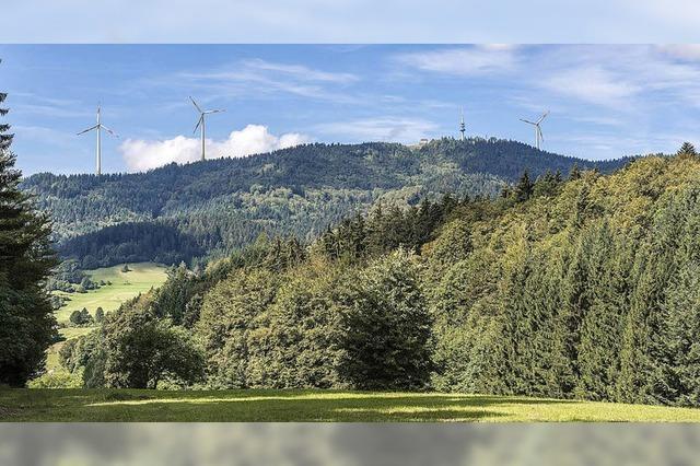 Zwischen Klima- und Artenschutz