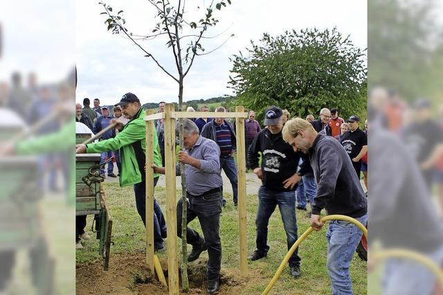 Birnbaum-Pflanzung beim Richtfest