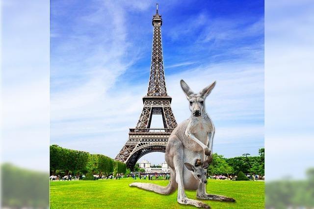 Beuteltier-Alarm an der Seine: Bei Paris leben 100 Kängurus