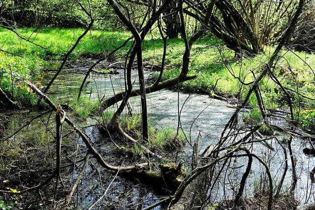 Ausgleich für Pumpspeicher auf 1230 Hektar Fläche