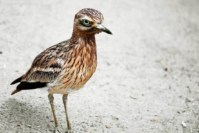 Erweiterung des Vogelschutzgebietes erzürnt Landwirte