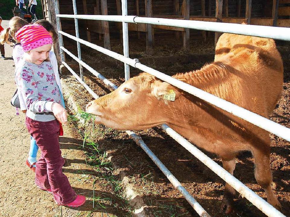 Hautnah eine Kuh erleben<ppp></ppp>  | Foto: Edgar Steinfelder