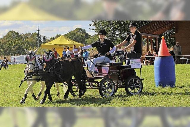 Mit Pferden und Ponys geschickt durch den Parcours
