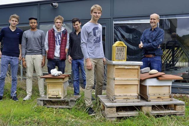 Droste-Hülshoff-Gymnasiasten finanzieren mit Schülerhaushalt Bienenstöcke