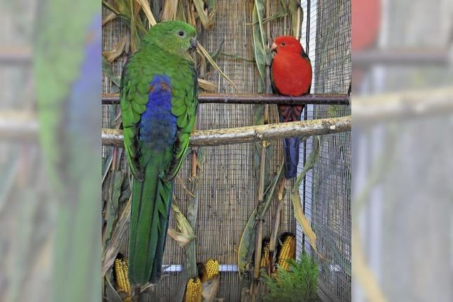 Vogelschau in Mundingen