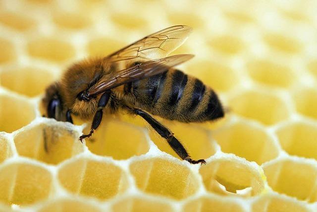 Nicht nur ein Honigschlecken