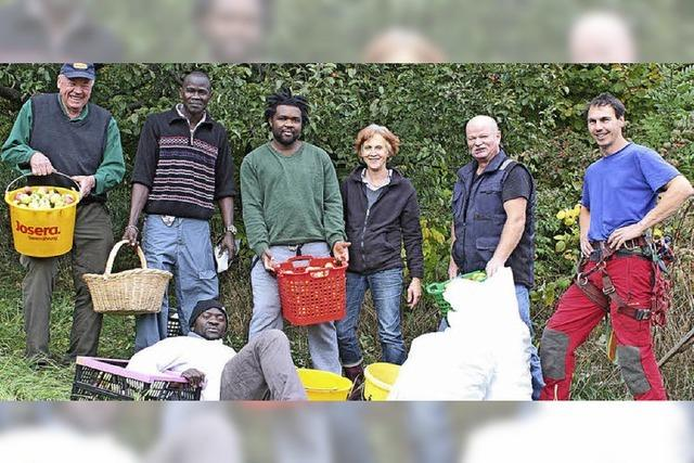Nabu-Ortsvereine derzeit bei der Apfelernte aktiv
