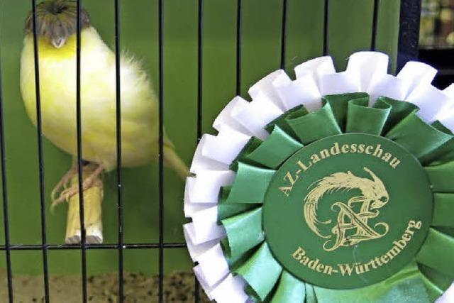 Aras, Papageien und Unzertrennliche
