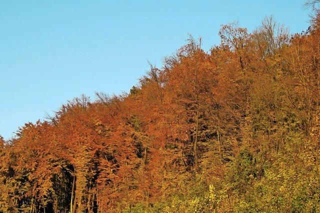 Vom goldenen Oktober wird nicht viel zu sehen sein