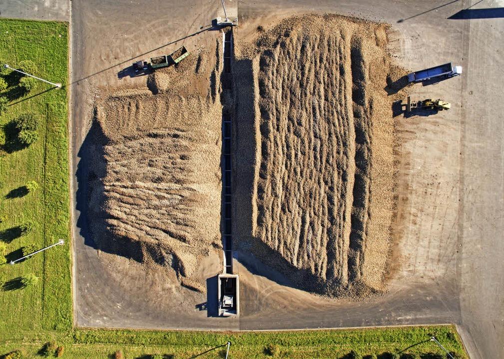 Landwirtschaft im großen Stil – Zuckerrübenernte in Niedersachsen    Foto: dpa