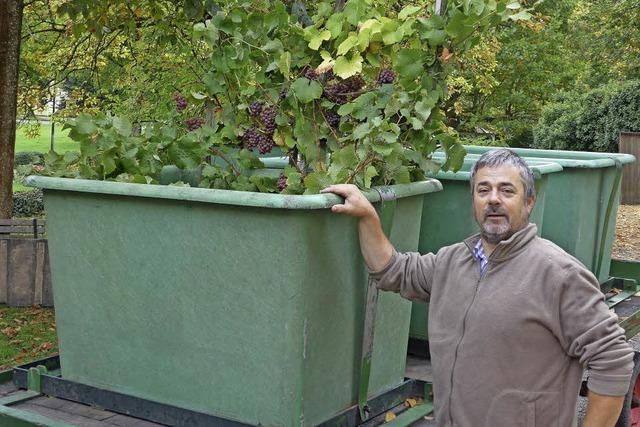 20 Herbsttage im Weingut