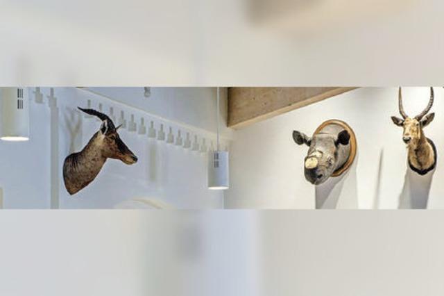 Das hornlose Nashorn hängt wieder an seinem Platz