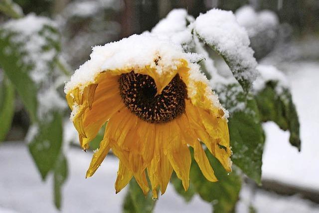 Der Winter hat vorbeigeschaut