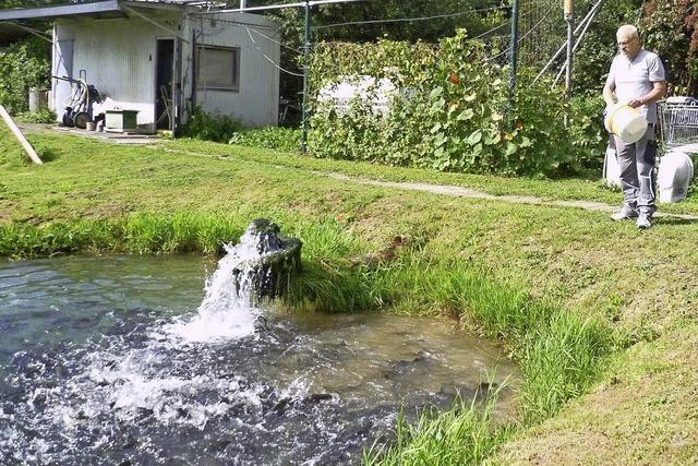 Angelsportverein Rheinfelden: Kleine Fische machen viel Arbeit