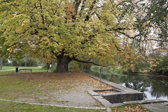 Soll der Bürgerpark Altes Grün eine Ruhezone oder ein Erlebnispark sein?