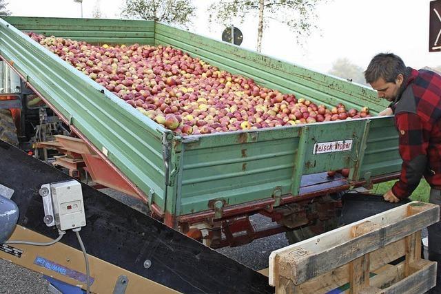 Der Apfel wird nicht weit vom Stamm gepresst