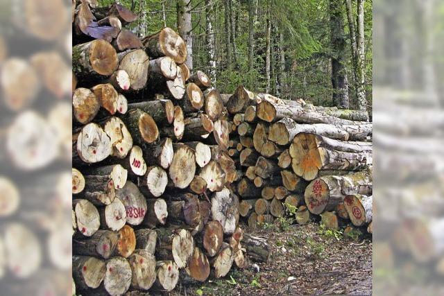 Der Wald soll auch 2016 Gewinn bringen
