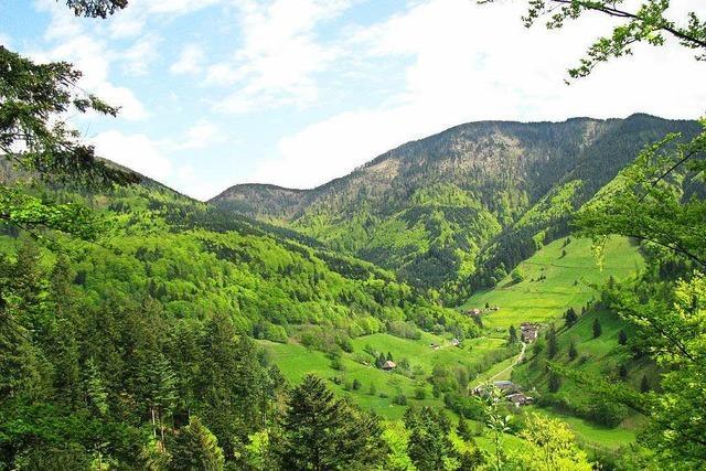 Kommt das Biosphärengebiet Südschwarzwald?