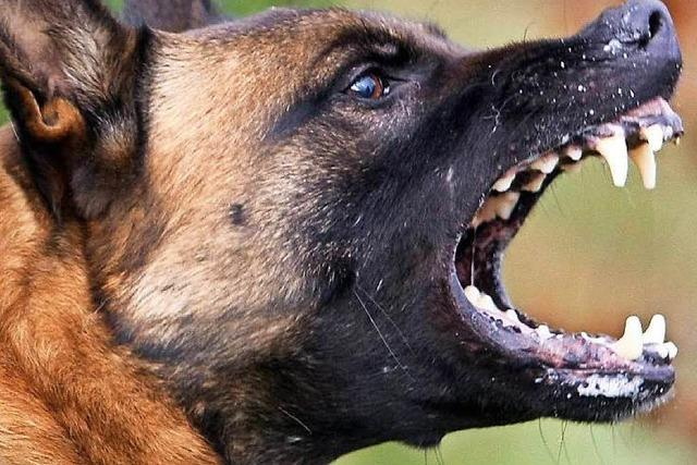 Hunde fallen Jogger an – rothaarige Halterin gesucht