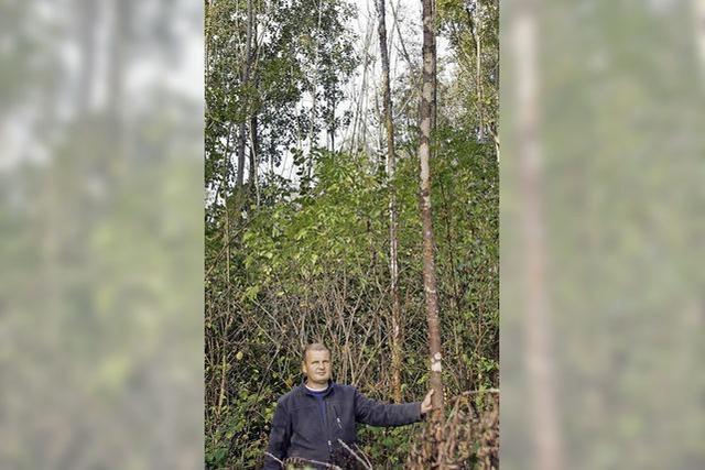 Sorgen trotz Rekordgewinn: Eschen-Krankheit schädigt den Gemeindewald