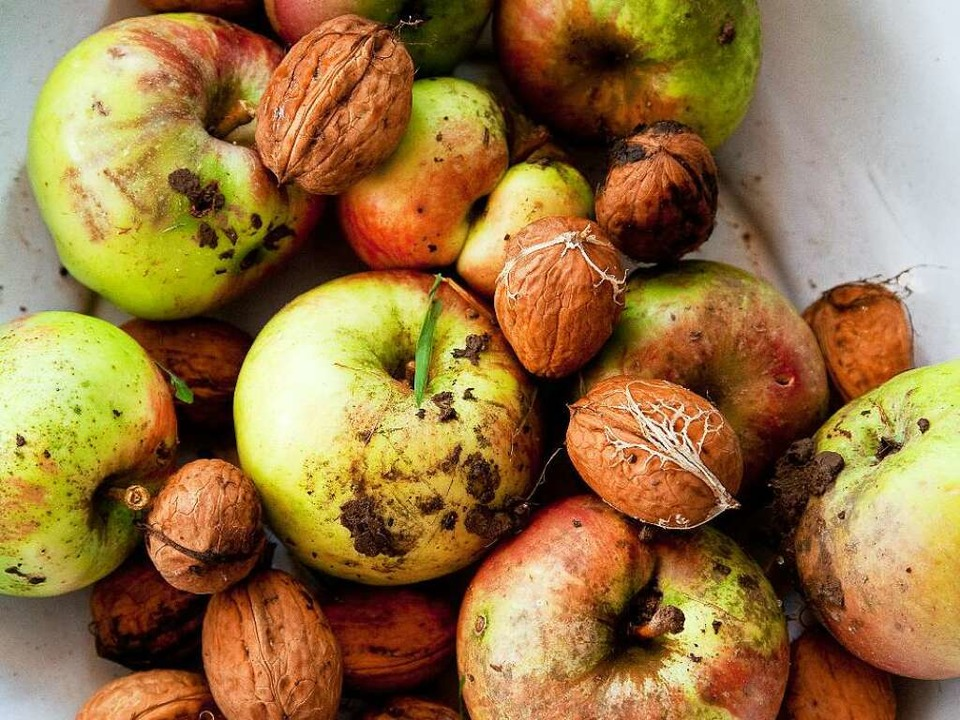 Fallobst und Nüsse sind die Haupternährungsquellen der Frutarier.    | Foto: MICHAEL WISSING