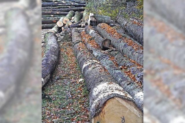 Gewinnoptimierte Waldwirtschaft macht Sorgen