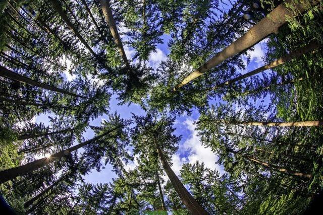Schwieriger Weg vom Wald zum Kunden