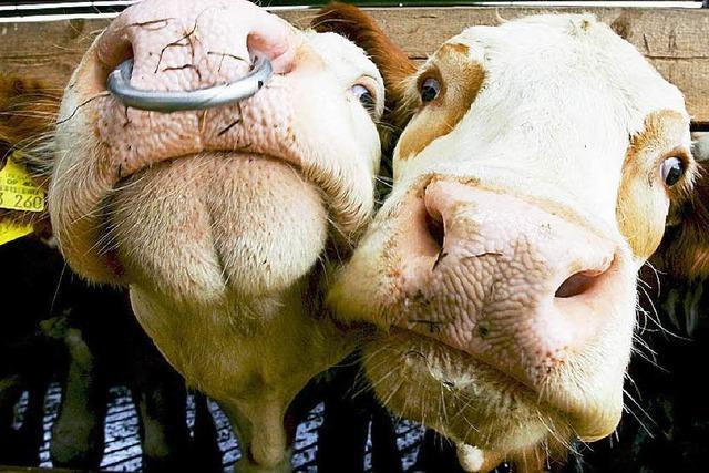 Landwirt soll Tiere vernachlässigt haben – Bewährungsstrafe