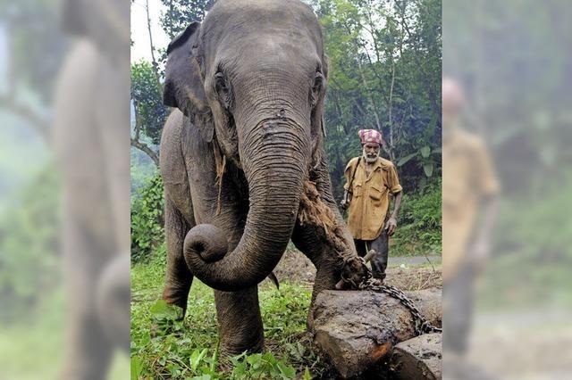 Was wird aus Myanmars Elefanten?