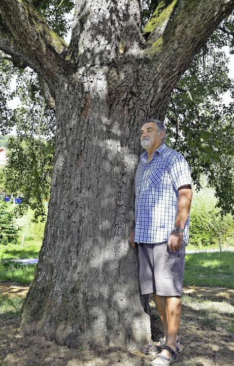 Der Birnbaum von Hans-Dieter Schmid in Feldberg    Foto: Jens-Uwe Voss