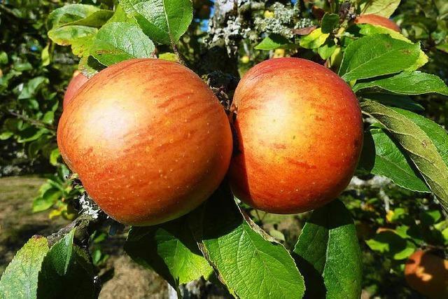 Warum alte Apfelsorten so gesund sind