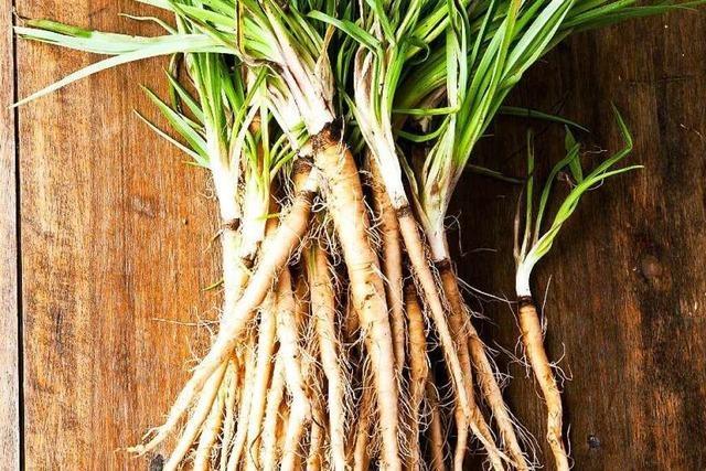 Was macht die Faszination alter Gemüsesorten aus?