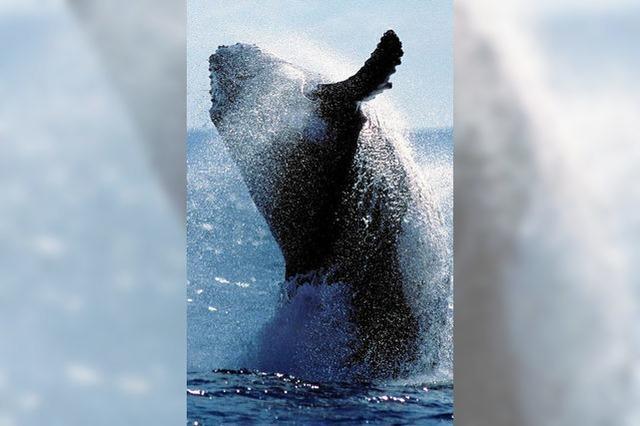 Tödlicher Ausflug zu den Walen