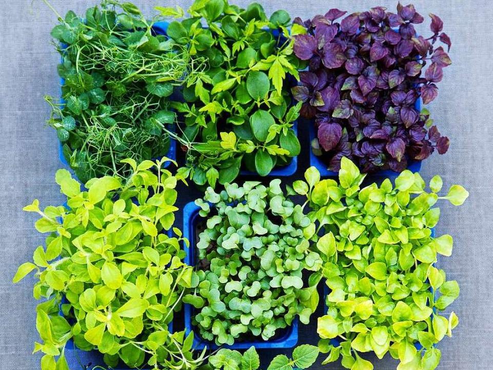 Landet alles im Mixer: Grüne Smoothies mit Gemüse und Kräutern liegen im Trend   | Foto: Michael Wissing