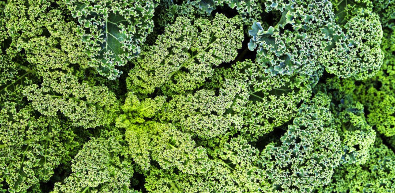 Grünkohl ist besonders reich an den Vitaminen A und C.  | Foto: MICHAEL WISSING