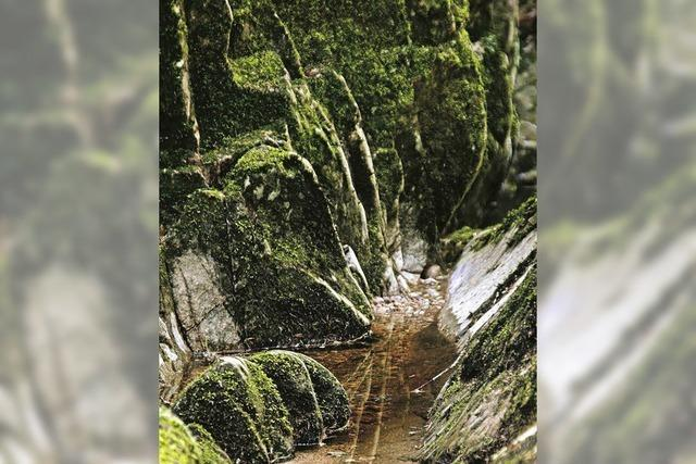 Schluchtensteig – eine virtuelle Wanderung auf dem wildromantischen Prädikatswanderweg im Südschwarzwald - in Höchenschwand