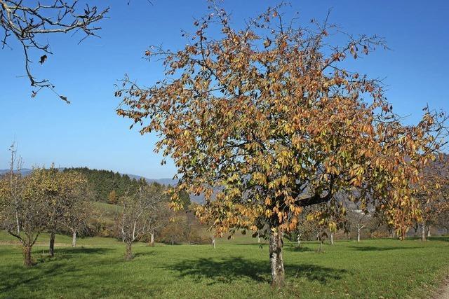 Auf dem Dinkelberg zählt jeder Hektar