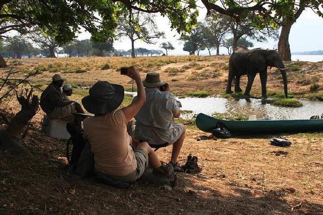 Zyanid: Giftangriffe auf Simbabwes Elefanten