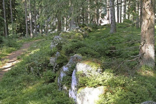 Zu steinernen Zeugen, die an Stonehenge (England) erinnern. Schluchsee-Blasiwald